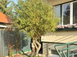 Použitie v záhrade