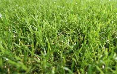 Umelý trávnik